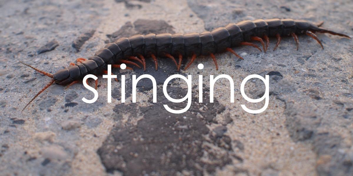 stinging